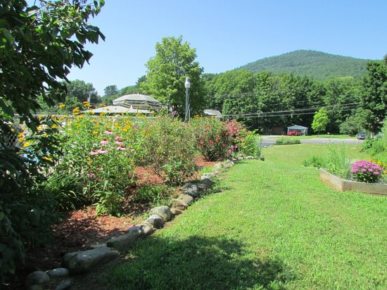 Adirondack Sunrise Motel & Cabins: pool garden from the front
