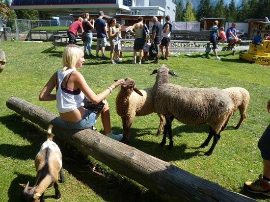 Lienzer Bergbahnen/ Osttirodler Alpine Coaster: zoo alla fine della cabinovia