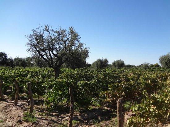 Ampora Wine Tours: Lagarde