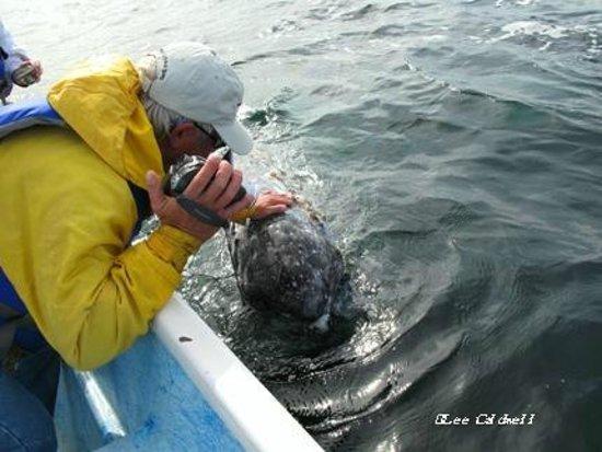 Пич-Спрингс, Аризона: Baja whale touch