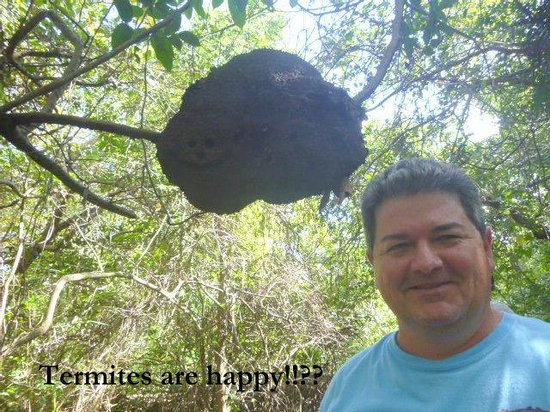 Community Baboon Sanctuary : termite nest