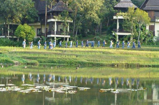 Lana Thai Villa: Le défilé des jardiniers.
