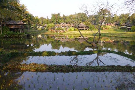 Lana Thai Villa: Le parc avec ses rizières.