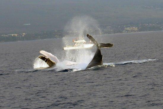 Pacific Whale Foundation: acrobatics at it's best