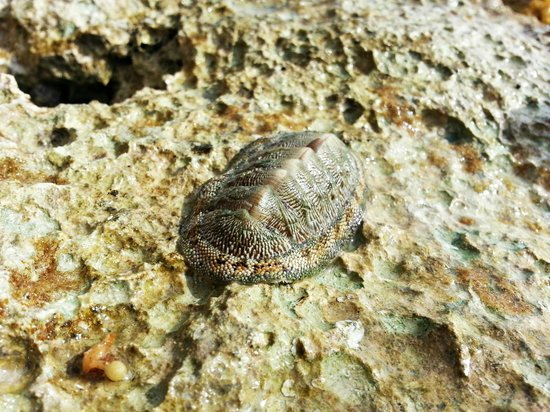 Bel Air Collection Xpu Ha Riviera Maya: Found in the rocks at the rocky beach.  I think a sea urchin?