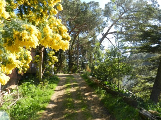 Can Millan Costa Brava : Jardín