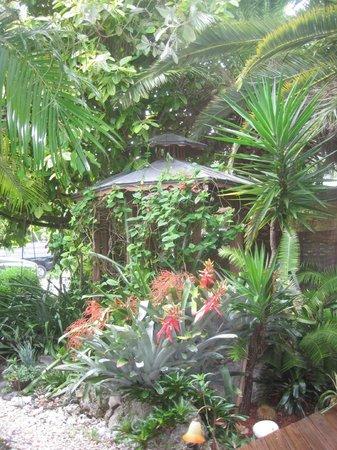 Atlantis House: Backyard