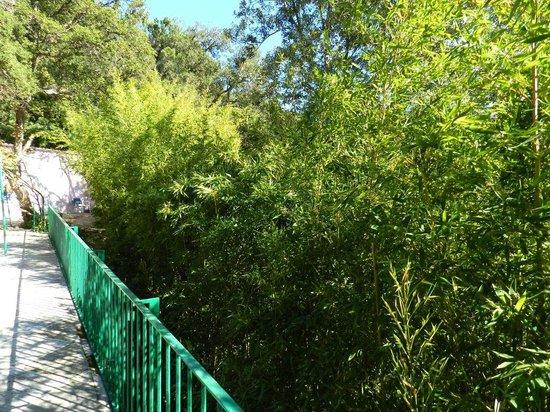 Can Millan Costa Brava : Terraza
