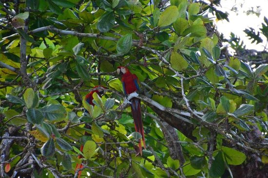Pacheco Tours: Macaw