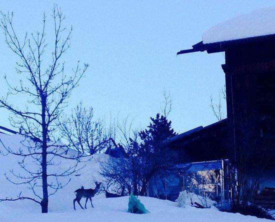 Agriturismo Sotgherdena: Mattina all' alba vicino casa