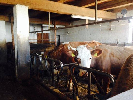 Agriturismo Sotgherdena: La stalla