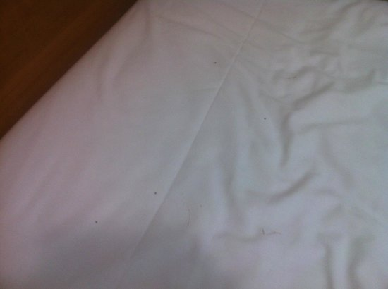 Ferntree Gully, Australia: Bed Bugs