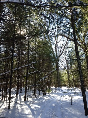 Inn at Lake Joseph : While snowshoeing