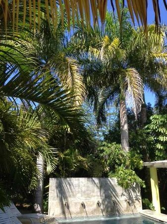 Palm Cottages: lovely palms everywhere