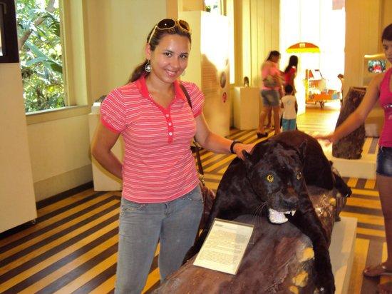 Museu Paraense Emílio Goeldi: domando o puma... empalhado.