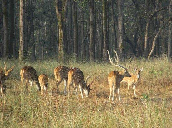 Bagh Tola Kanha: Great Safari Adventure