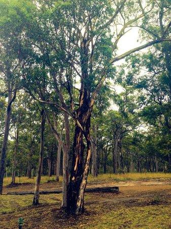 The Hunter Valley Retreat: Bushland