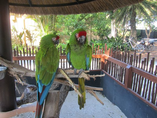 Naples Zoo at Caribbean Gardens : macaws