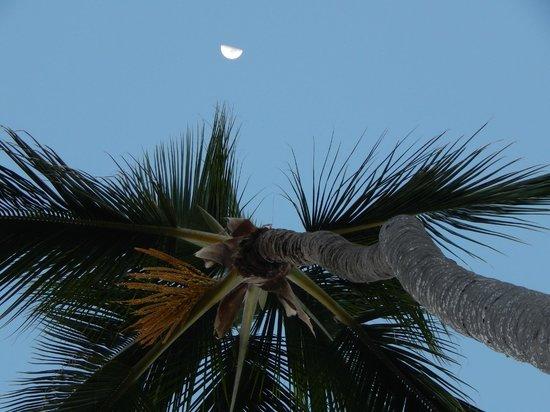 Sirenis Punta Cana Resort Casino & Aquagames : Lune et palmier