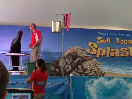 Tampa's Lowry Park Zoo : sea Lions special exhibit