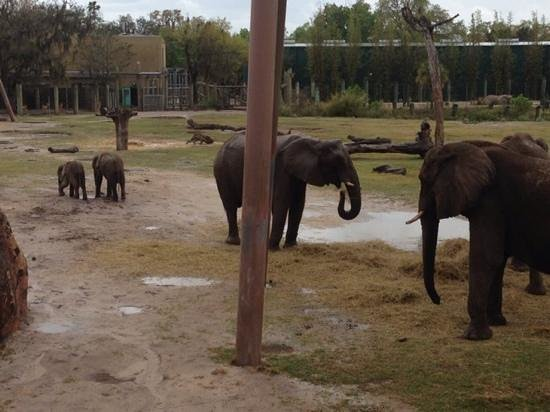 Tampa's Lowry Park Zoo : baby elephants