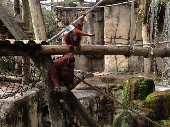Tampa's Lowry Park Zoo : the monkeys put on a great show!