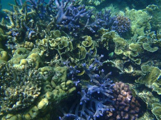 Hideaway Island Marine Reserve: Coral