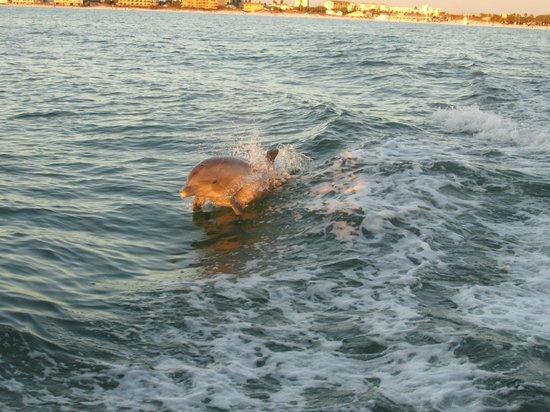 Little Toot Dolphin Adventures: Little Toot