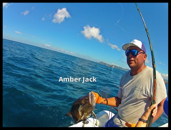 Papagayo Gulf Sport Fishing - North Pacific Tours: Amber Jack of the Day