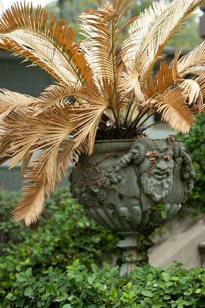 Capturing Savannah - Photography Tours: Fern in the Eyes