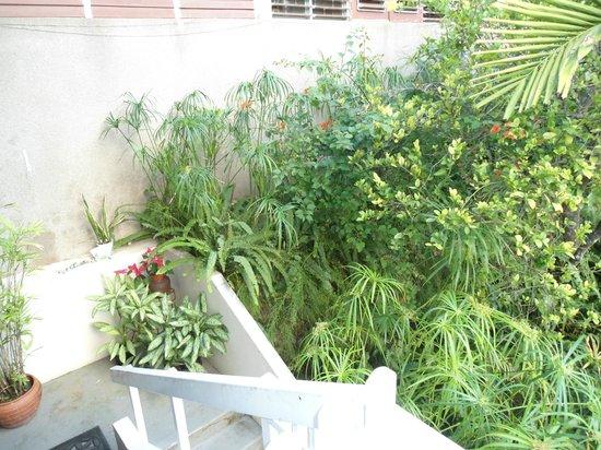 Neita's Nest: Fauna around the house