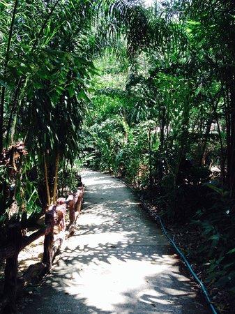 Khao Sok Las Orquideas Resort: Weg zum Bungalow