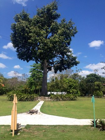 La Casa De Don David: Mayan tree of life