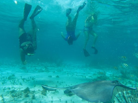 Ezona's Aquatics: Snorkeling with the Stingray