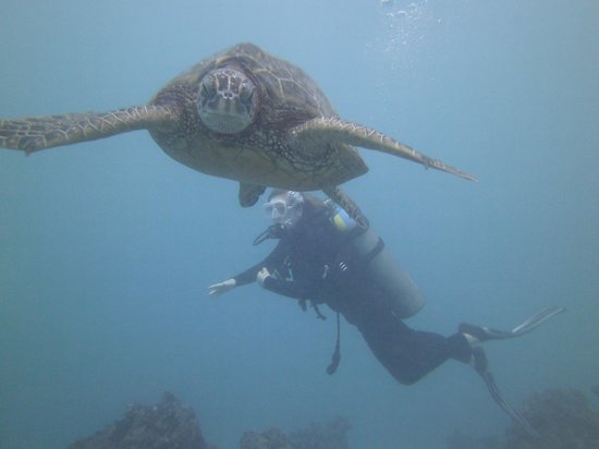 Living Ocean Scuba: Turtles! So neat!