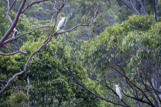 Cedar Lake Country Resort: Birds in a tree at Cedar Lake