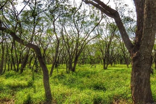 Sabal Palm Sanctuary : Forest walk