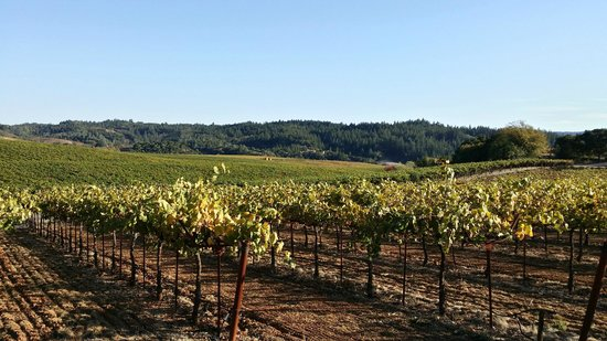 Wine Cube Tours: Dry Creek Valley