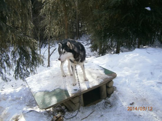 Alaskan Tails of the Trail with Mary Shields : One of Mary's dogs.