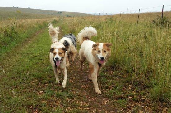 Stone Hill: Paddington and Whiskey: Off lead fun on the 5km walk