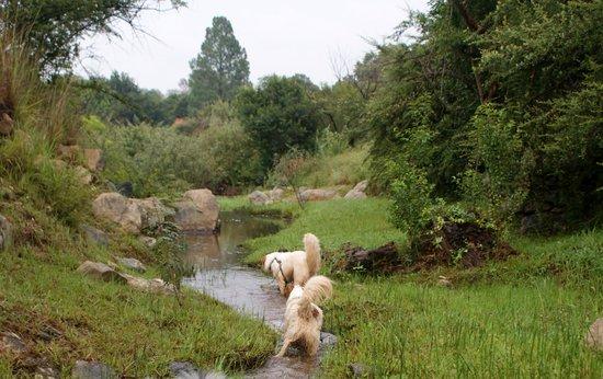 Stone Hill: River walk