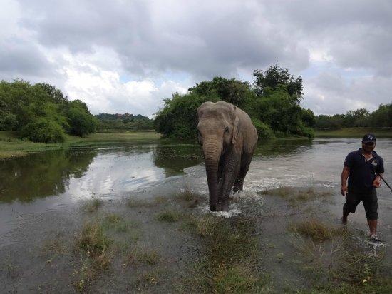 Phnom Tamao Wildlife Rescue Center : Her play time