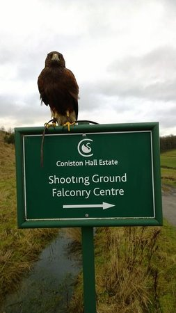 ‪Coniston Falcon Centre‬