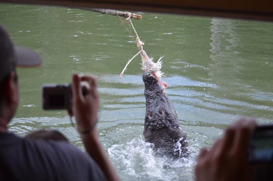 Hartley's Crocodile Adventures: Feeding time from the boat
