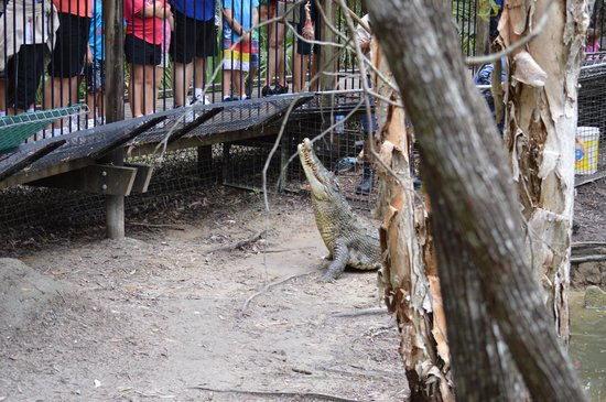 Hartley's Crocodile Adventures: Ready to show off