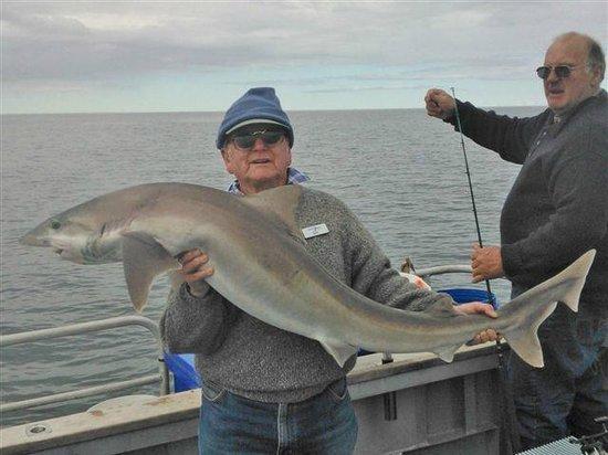 Fishing Spot-X: the odd shark