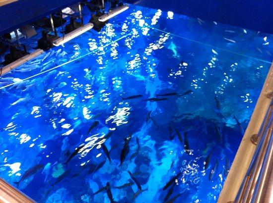 Dubai Aquarium & Underwater Zoo: impressive