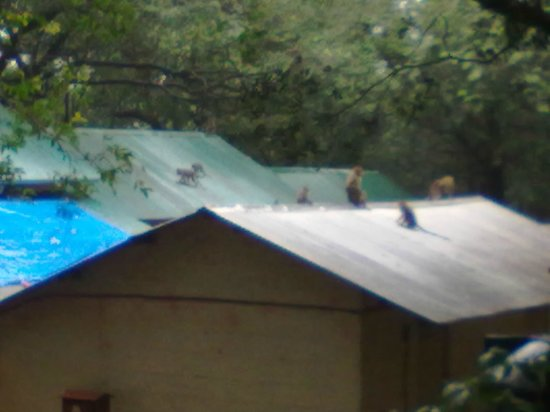 MTDC, Matheran: roof of separate rooms..