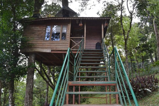 Nature Zone Resort : Tree House IV, tallest in the flock of trees