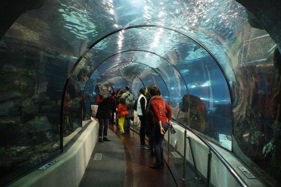 L'Aquarium de Barcelona: А над тобой акулы проплывают))